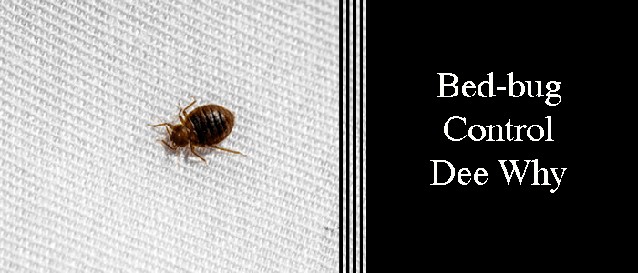 Bed Bug Control Dee Why
