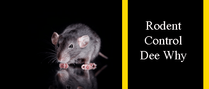Rodent Control Dee Why